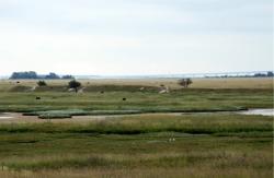 Saltholm Kalkgrav