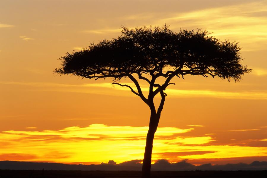 afrika læseklub